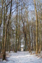 Les bois de Villeron en hiver