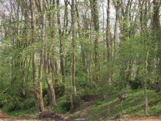 Le bois, Villeron