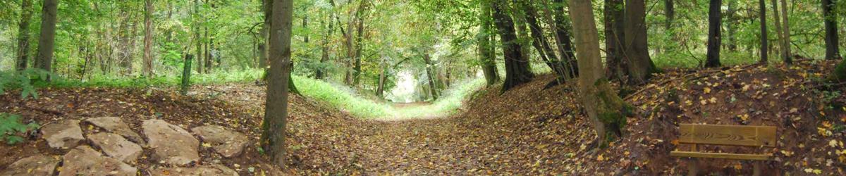 Forêt de Villeron